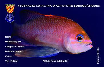 Llicència Federativa FECDAS